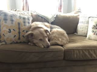 He is slightly lazy (and clearly allowed on the furniture)!