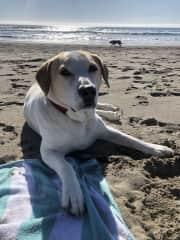 Lounging at Stinson Beach