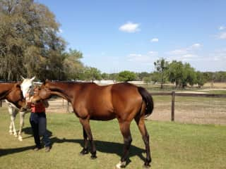 Palsy Wowsy thoroughbred
