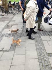 Seems Im always taking photos of someone else walking dogs