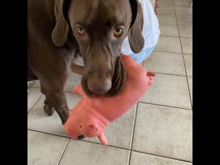 Loves his toy pig