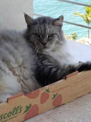 Bandit loves his strawberry box in Vancouver and Puerto Vallarta!