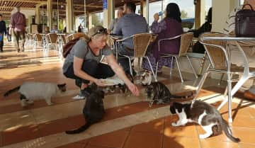I took a trip to Turkey in 2019. There are so many stray hungry cats. I have been trying to find ways to give back when I travel, so I tried to feed the cats when I could.