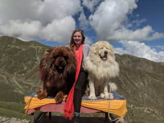 Me with my tour guide's dogs, Cunu and Jampo, in the Himalayas!