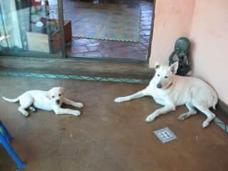 Sawa and Zimbo, a rescue dog