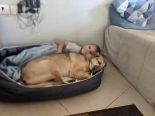 Taking a nap together