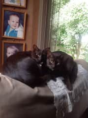 Lily and Milly sharing the top of a chair.