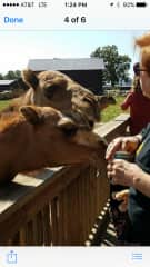 They say get picturess with animals. These two are pics from a petting zoo in Wisconsin.