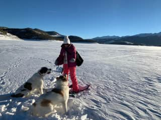 Snowshoeing with the pups