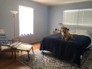 4 bedrooms, 3 large and 1 small.  And there's Beau!!
