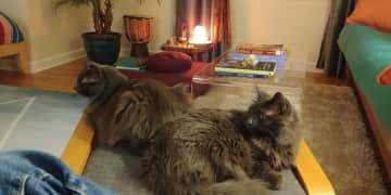 Itty Bitty and Gus- brothers from another mother. (Seriously- they are not related by blood!)