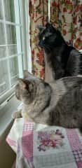 Watching squirrels from the kitchen window.