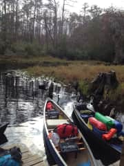 Canoe camping in  the Okeefenokee Swamp.