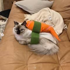 Sylvia in her halloween costume