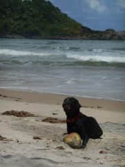 Amora at the beach with a coconut