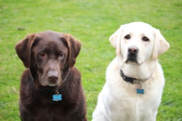 Our two labs!