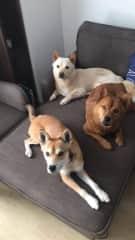 Django, Bodie and Jasper