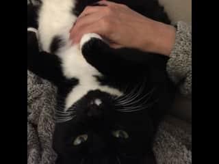 Nellie loooooves belly rubs!