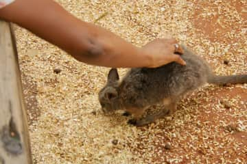Dimisea & baby Kangaroo in Sydney