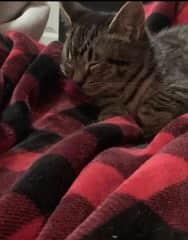 A Kitten Named Prune!