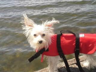 Safety first - Bella in her life jacket!