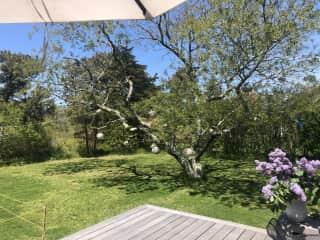 Deck / Fenced in yard