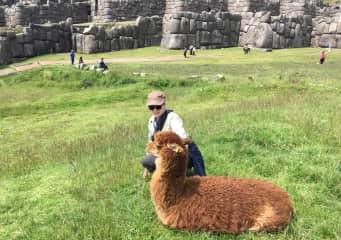 Alpaca and me in Peru