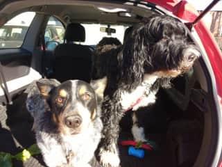Housesit #3 - Zeus and Brody (Picton, ON)