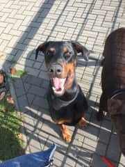 that's the good Boy Roan which we have been sitting in Germany
