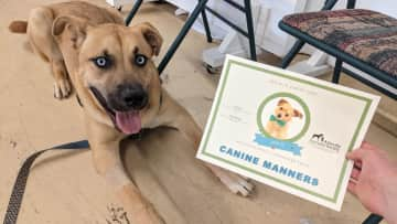 A good boy who graduated from his Canine Manners class!
