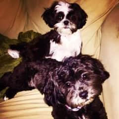 Bentley and Bailey