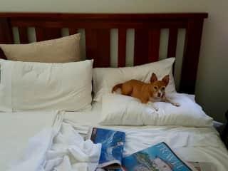 My divine Miss Muffin enjoying a Sunday morning sleep in.