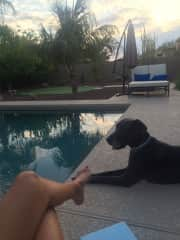 Home and dogs I sit for in Chandler, AZ
