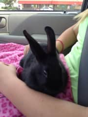 """My daughter's bunny """"JP"""" named after a boy she liked… (insert eye roll) lol"""