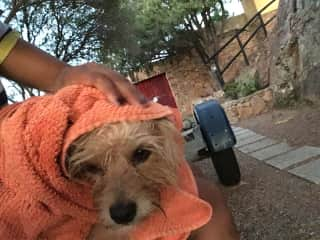Daisy taking a bath after going to dog beach