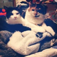 My kitty friends
