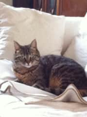 Our cat Cachou