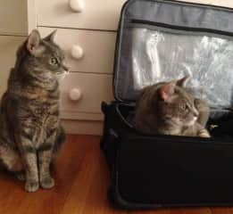 My cats Vivi and Allegro hijacking my suitcase