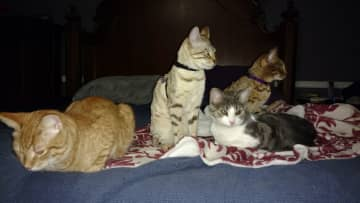 Ratchet (ginger), Cleo, Clank (Ratchet's sister) and Tasha (Cleo's sister)