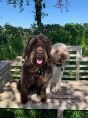 Twiggy and Reggie