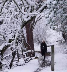 Dog walking in the Oregon snow