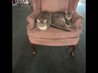 Marlei and Kingston. My beautiful babies