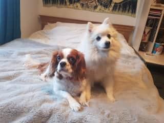 Ruby (left) Poppy (right)