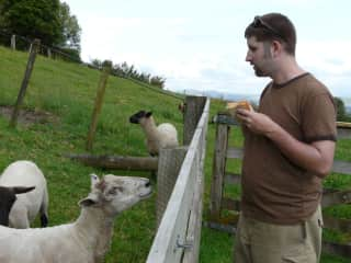 Sharing breakfast with the sheep during a farmstay in New Zealand