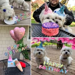 We may or may not have thrown a birthday party for two pups we were sitting.