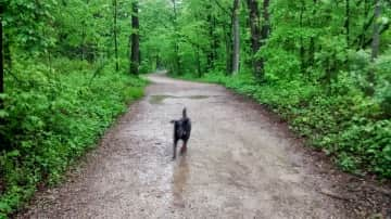 Out for a jaunt with the dog. She is so happy.
