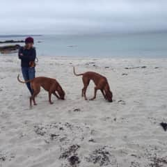 On the beach with our Rhodesian ridgebacks
