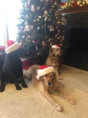 Doggy Christmas in Michigan at my family's house.