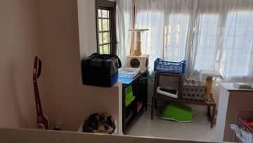 Kitties lounge and Lulu
