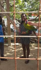 This beautiful Macaw was a sight to behold.
